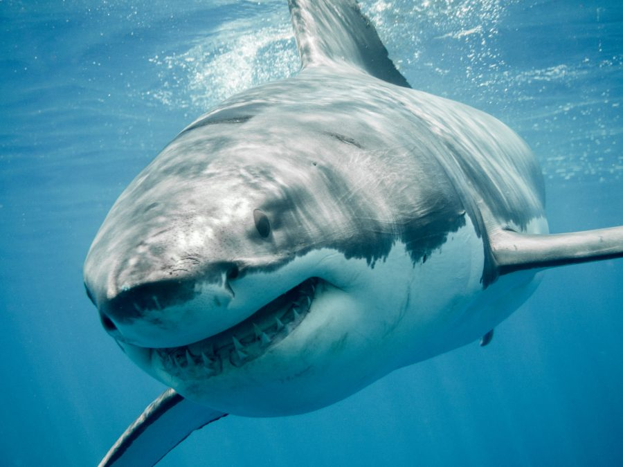 5 Of The Scariest Sharks In The World
